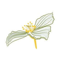 Jasmine flower white isolated vector