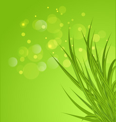 Spring background background with green grass vector image vector image