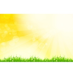 Fresh green grass with yellow bokeh and sunlight vector