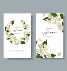 jasmine flowers banners vector image vector image