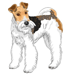 dog Wire Fox Terrier breed standing vector image vector image