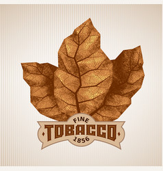 Three dry tobacco leaves with label vector