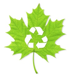 Recycle green leaf vector