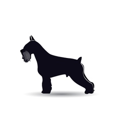Schnauzer dog silhouette vector image vector image