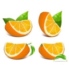 Fresh ripe oranges vector