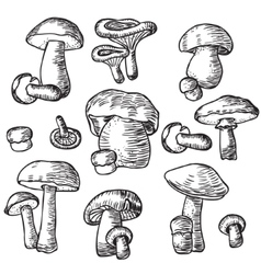 Mushrooms set Compilation of vector image