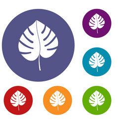 Leaf of monstera icons set vector
