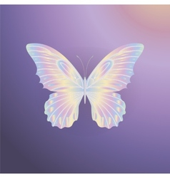 pearl Lace butterfly on purple background vector image