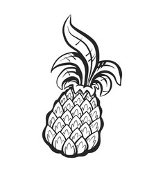 pineapple fruit vector image
