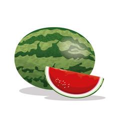 Watermelon fruit fresh harvest vector