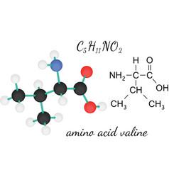 C5H11NO2 valine amino acid molecule vector image
