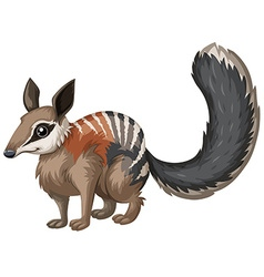 Wild numbat with happy face vector image vector image