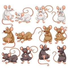 Mouse with different fur color vector