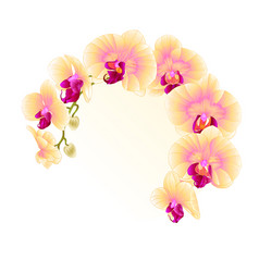 Frame beautiful orchid yellow stem with flowers vector
