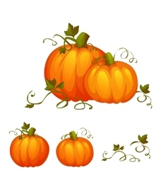 Fresh two pumpkin with sweet green leafs vector
