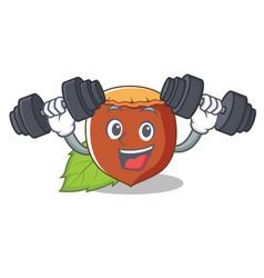 fitness hazelnut character cartoon style vector image