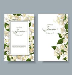 Jasmine flowers banners vector