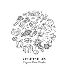 Poster round composition with hand drawn vegetable vector