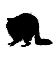 Raccoon animal wildlife pictogram style vector