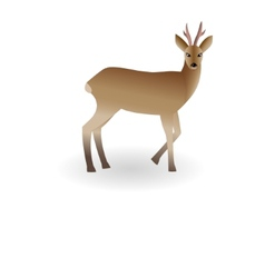 Wild animal roe vector