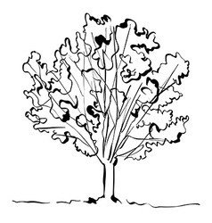 Monochrome hand drawn tree on white background vector