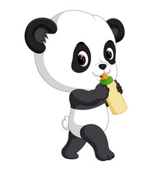 cute baby panda holding bottle vector image vector image