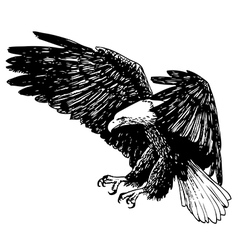 Eagle 1 vector