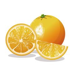 Orange fruit fresh harvest vector