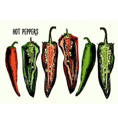 Set of hot peppers vector