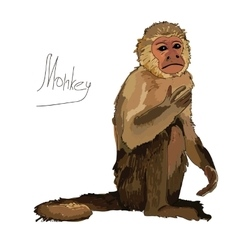 Watercolor monkey on white background vector