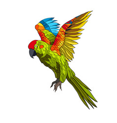 A flying parrot with yellow vector