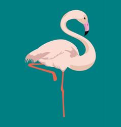 flamingo tropical bird icon vector image