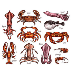 Sea animal sketches with fish and crustacean vector