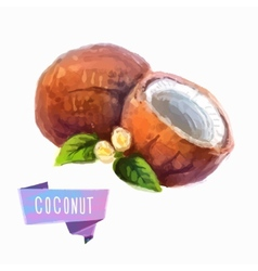 Coconut hand drawn watercolor on a white vector image vector image