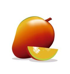 Mango fruit fresh harvest vector