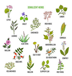 Demulcent herbs hand drawn set vector
