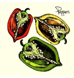 Set of peppers vector