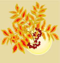 Twig rowanberry with leaves and berries and sun vector