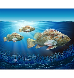 Groupers swimming in the ocean vector