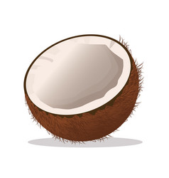 Coconut fruit fresh harvest vector