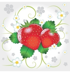 Fresh strawberries vector image vector image