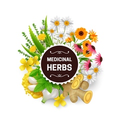 Medicinal Herbs Plants Wreath Flat Frame vector image vector image