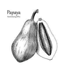 papaya hand drawing vintage style vector image