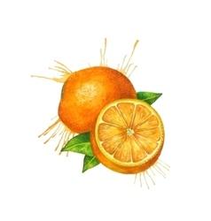 Watercolor orange sketch vector