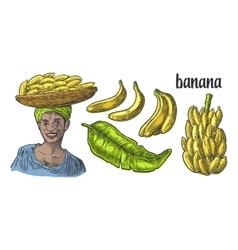 Two single and bunches of fresh banana with leaf vector