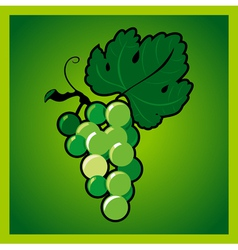 Green grape bunch vector image