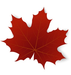 Red maple leaf on a white background vector image vector image