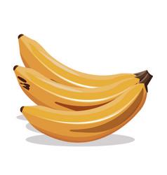 Banana fruit fresh harvest vector
