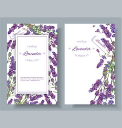 Lavender flowers banners vector