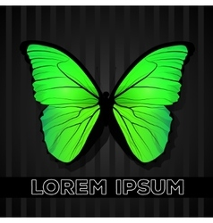 Yellow-green butterfly isolated vector